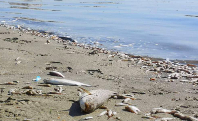 iniciativas españolas para salvar el mar